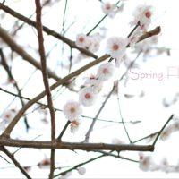 Sprig flower