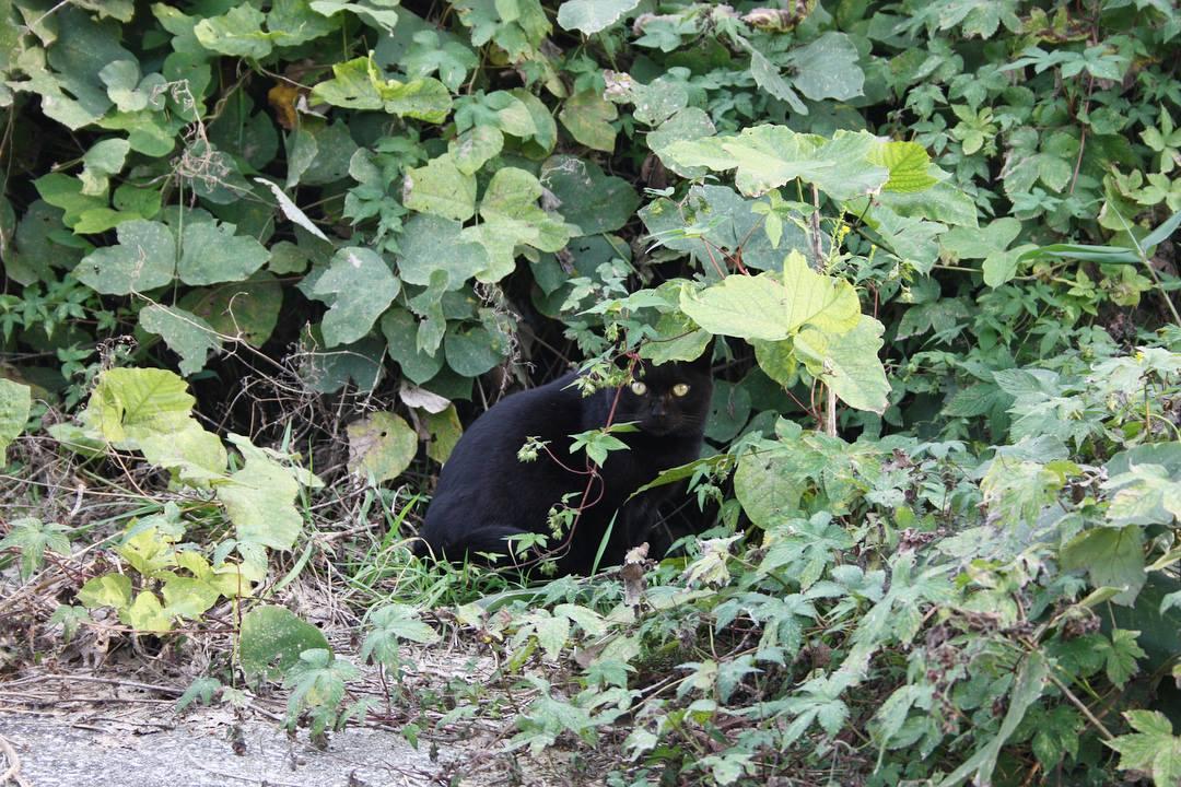 黒猫の黒ちゃん